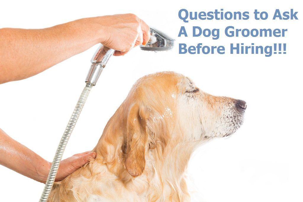 Questions to Ask A Dog Groomer Before Hiring