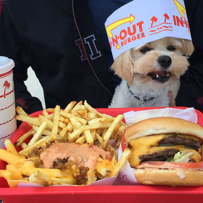 The Dangers Of Junk Food for Your Dog's Health   Junk Dog Food