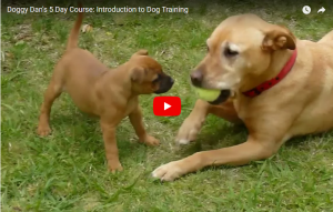 tips to use to train your dog or puppy