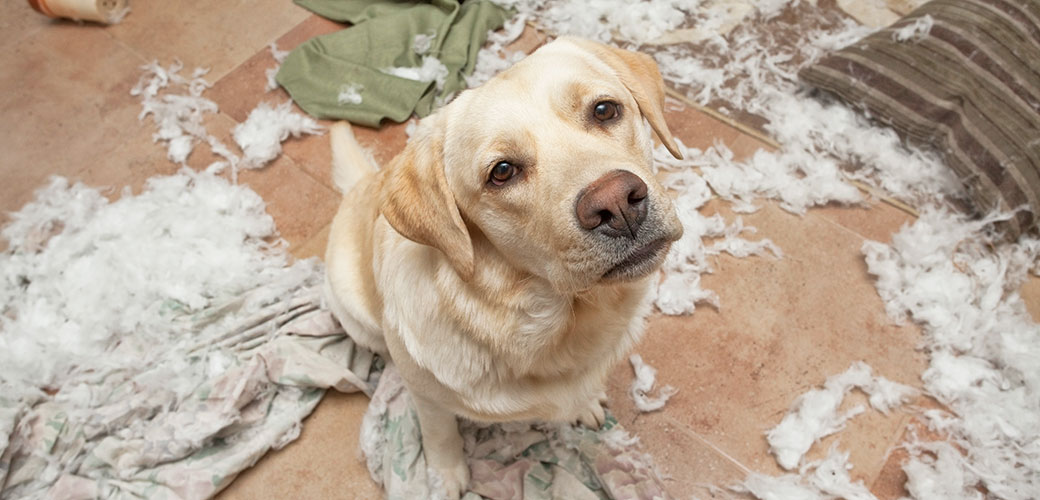 Separation Anxiety In Dogs | symptoms of dog separation anxiety