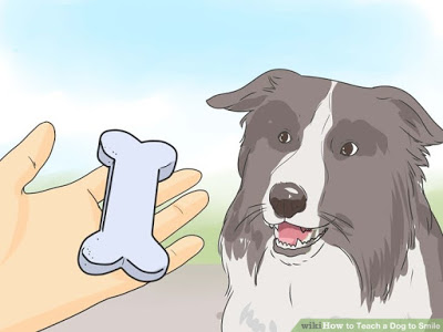 Dog Training Reward Programs
