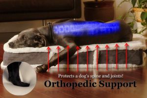 Best Orthopedic Dog Beds 2018